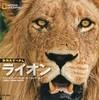 動物大せっきん ライオン