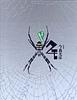 やあ! 出会えたね クモ