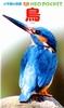 小学館の図鑑 NEO POCKET −ネオぽけっと−鳥