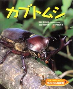 ドキドキいっぱい!虫のくらし写真館(1) カブトムシ