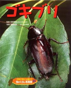 ドキドキいっぱい!虫のくらし写真館(23) ゴキブリ