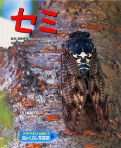 ドキドキいっぱい!虫のくらし写真館(6) セミ