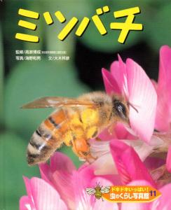 ドキドキいっぱい!虫のくらし写真館(11) ミツバチ