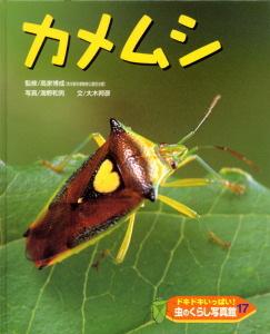 ドキドキいっぱい!虫のくらし写真館(17) カメムシ