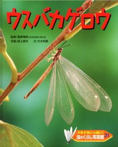 ドキドキいっぱい!虫のくらし写真館(21) ウスバカゲロウ