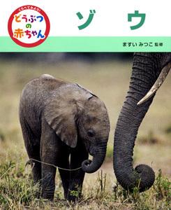 くらべてみよう!どうぶつの赤ちゃん ゾウ