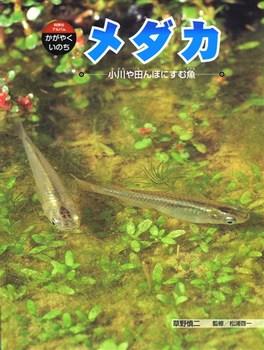 科学のアルバム・かがやくいのち メダカ 小川や田んぼにすむ魚