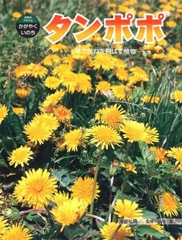 科学のアルバム・かがやくいのち タンポポ 風でたねを飛ばす植物