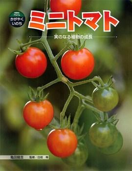 科学のアルバム・かがやくいのち ミニトマト 実のなる植物の成長