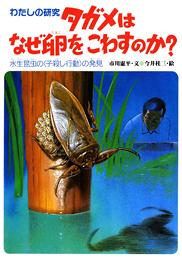 わたしの研究(7) タガメはなぜ卵をこわすのか?−水生昆虫の<子殺し行動>の発見