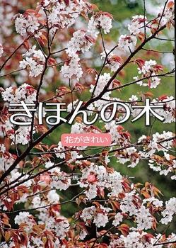 きほんの木 花がきれい