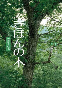 きほんの木
