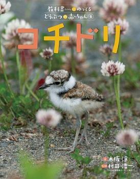 教科書にのってるどうぶつの赤ちゃん(6) コチドリ