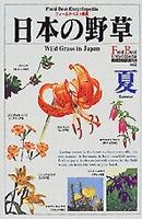 日本の野草 夏