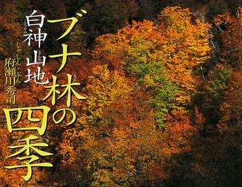 ブナ林の四季・白神山地