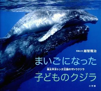 まいごになった子どものクジラ