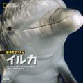 動物大せっきん イルカ