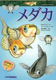 いのちのかんさつ(3) メダカ