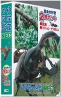 小学館の図鑑NEO/昆虫大好き2冊セット