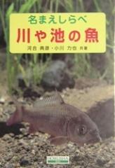 川や池の魚 名まえしらべ