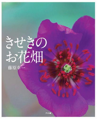 お花畑 画像